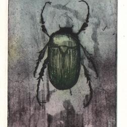 Beetle, etching