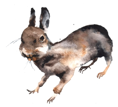 Badly stuffed animals; Bunny, aquarelle