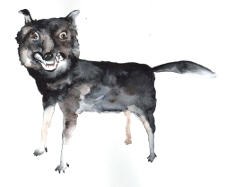 Badly stuffed animals; Wolf, aquarelle