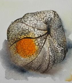 Ananaskirsikka, aquarelle 15cm x 15cm