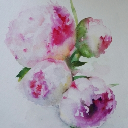 Peonies, aquarelle SOLD