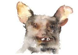 Badly stuffed animals; Bat, aquarelle