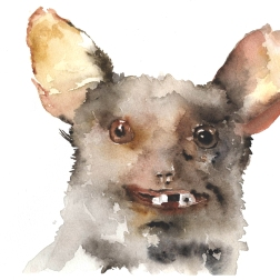 Badly stuffed animals; Bat, aquarelle