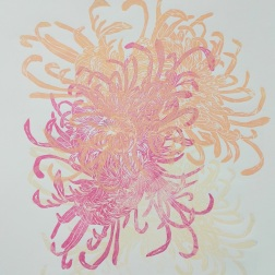 Chrysanthemum, woodcut 70cm x 50cm