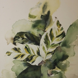 Calathea, Watercolor 30cm x 40cm 2019